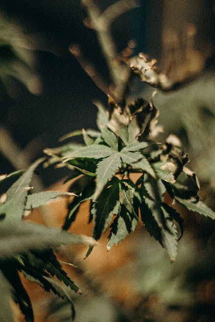 Marketing your cannabis company online requires a professional-looking website. Here are factors to consider when designing cannabis websites.